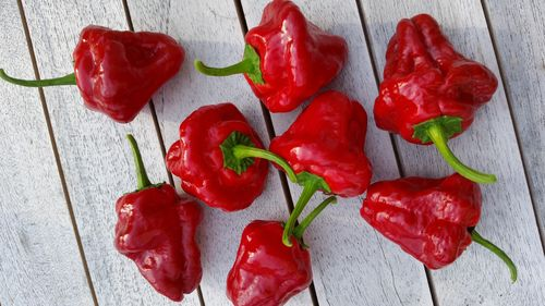 Jamaican Hot Red Chili Jungpflanze