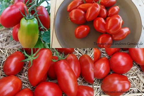 Howard German Tomate Jungpflanze